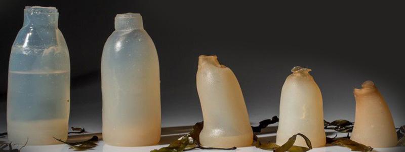 саморазлагающиеся бутылки из водорослей